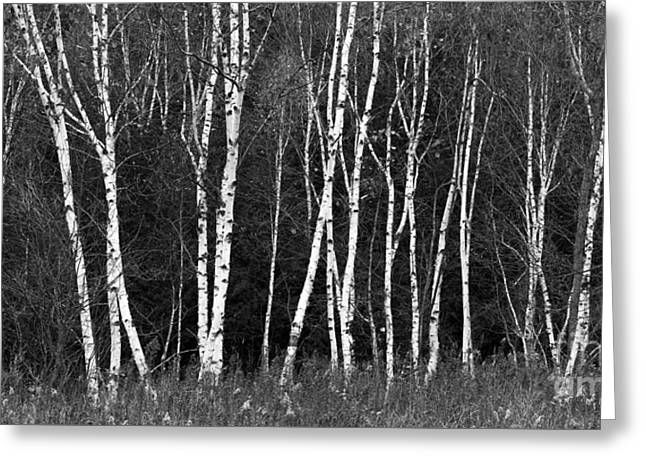 Borches In Black And White Greeting Card by Twenty Two North Photography