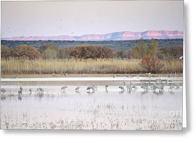 Sunset Greeting Cards Greeting Cards - Bosque del Apache Sunset Lake Greeting Card by Andrea Hazel Ihlefeld