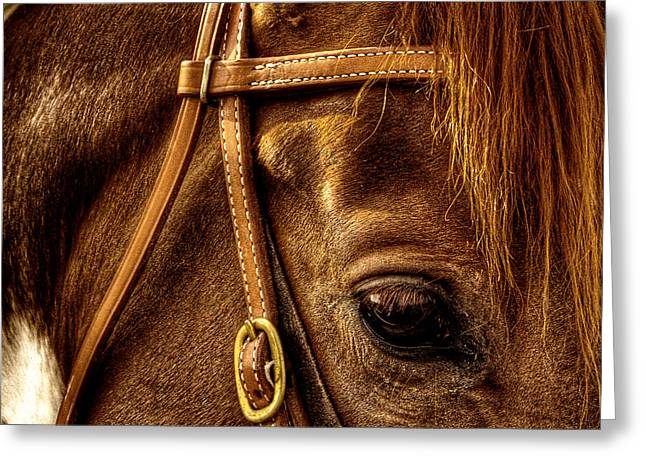 Bridled Greeting Card by David Patterson