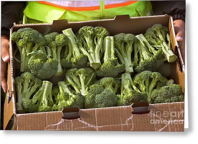 Broccoli Greeting Cards - Broccoli Greeting Card by Inga Spence