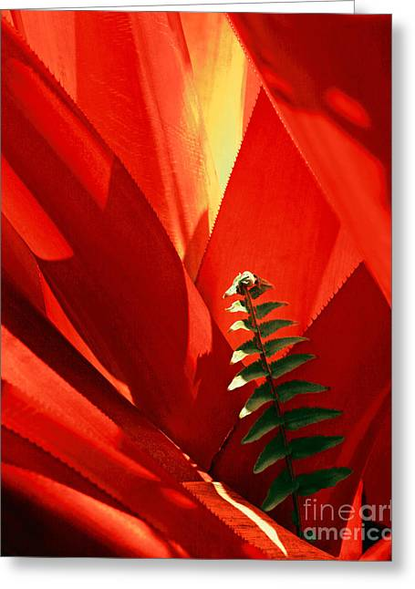 Bromeliad Spiney Leaves Greeting Card by Frank Wicker