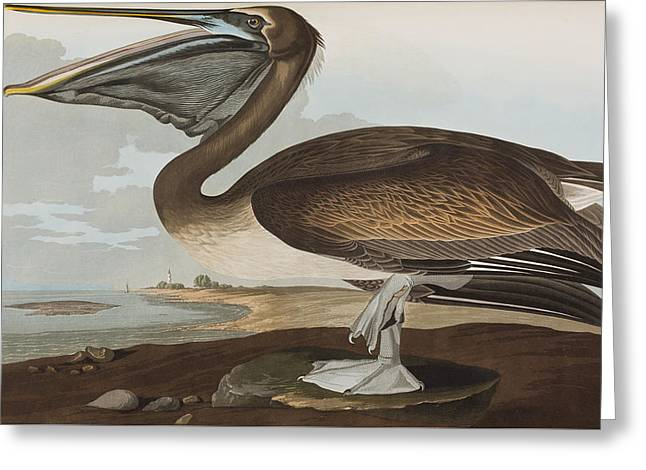 Brown Pelicans Greeting Cards - Brown Pelican Greeting Card by John James Audubon
