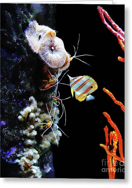 Transformative Art Greeting Cards - Busy Shrimp Greeting Card by Lisa Redfern