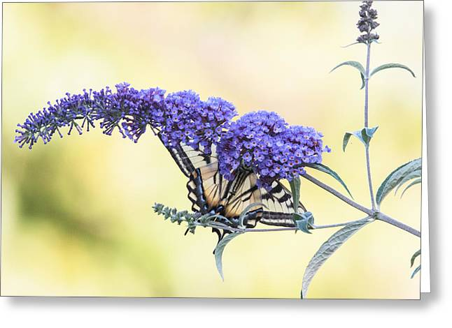Flower Blossom Greeting Cards - Butterfly Bush Greeting Card by Angie Vogel