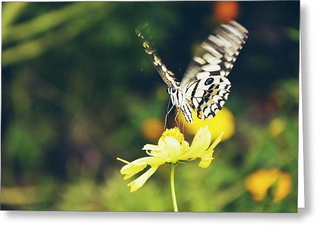 Butterfly In Motion Greeting Cards - Butterfly on flower Greeting Card by Nguyen Truc