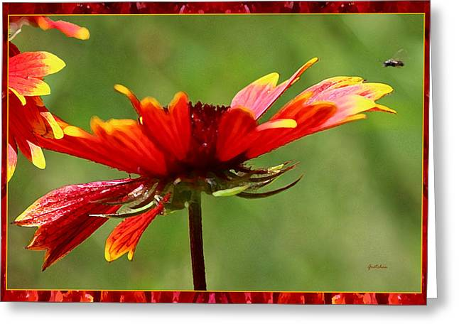 Sunlight On Flowers Digital Greeting Cards - Buzzing Around Blanket Flowers Greeting Card by Gretchen Wrede