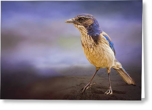 Flying Animal Greeting Cards - Blue Scrub Jay Greeting Card by Maria Coulson