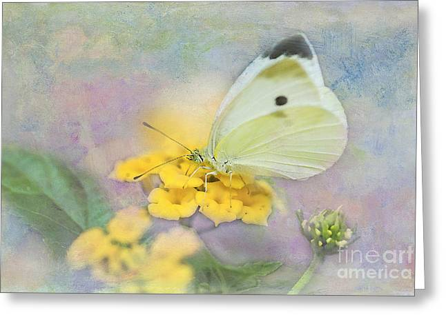Cabbage White Butterfly Greeting Cards - Cabbage White Butterfly Greeting Card by Betty LaRue