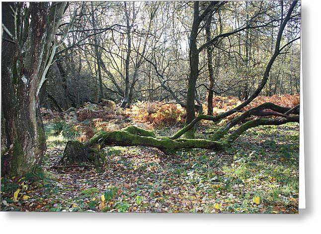 Cannock Chase Greeting Cards - The Beauty and Beast of Cannock Chase Forest Greeting Card by Jean Walker