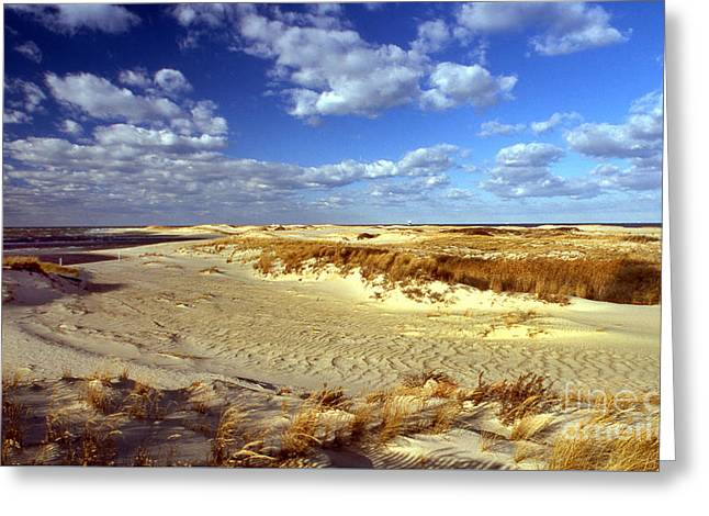 Beach Photography Greeting Cards - Cape Henlopen Greeting Card by Skip Willits