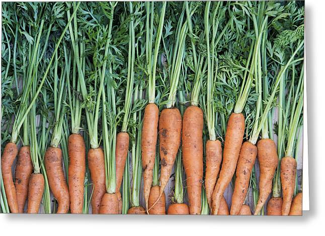 Harvest Art Greeting Cards - Carrots Greeting Card by Tim Gainey