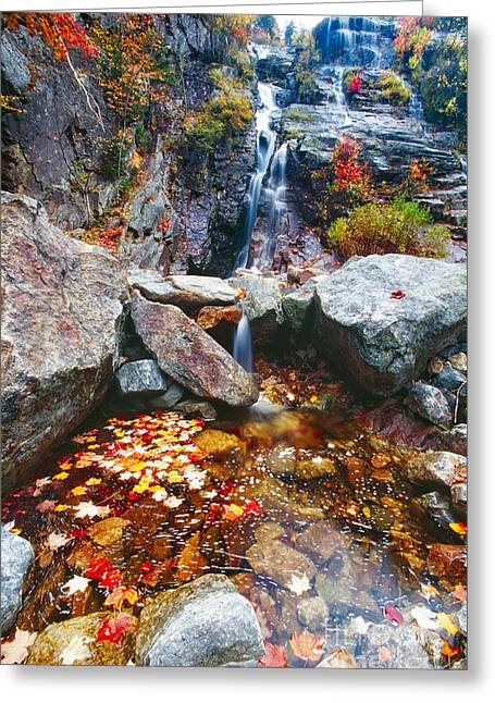 Fallen Leaf Greeting Cards - Cascades of Color Greeting Card by George Oze