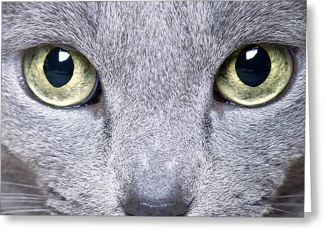 Pedigreed Greeting Cards - Cat Eyes Greeting Card by Nailia Schwarz