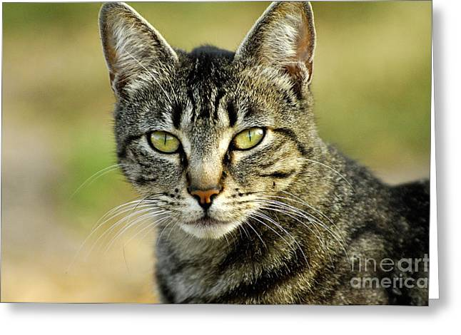 Cats Photographs Greeting Cards - Cat Greeting Card by Marc Bittan