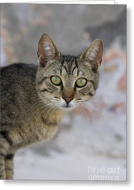 Domestic Pet Portraits.house Cat Greeting Cards - Cat Portrait, Greece Greeting Card by Jean-Louis Klein & Marie-Luce Hubert