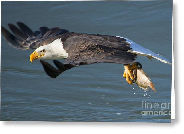 Catch In Hand Greeting Card by Mike Dawson