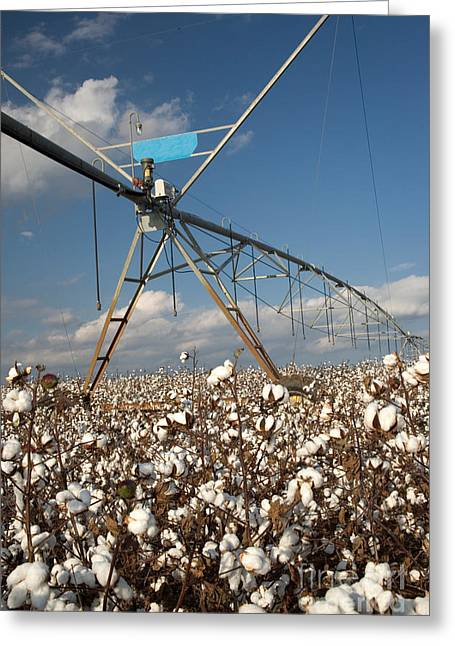 Georgia Cotton Fields Greeting Cards - Center Pivot In Cotton Field Greeting Card by Inga Spence