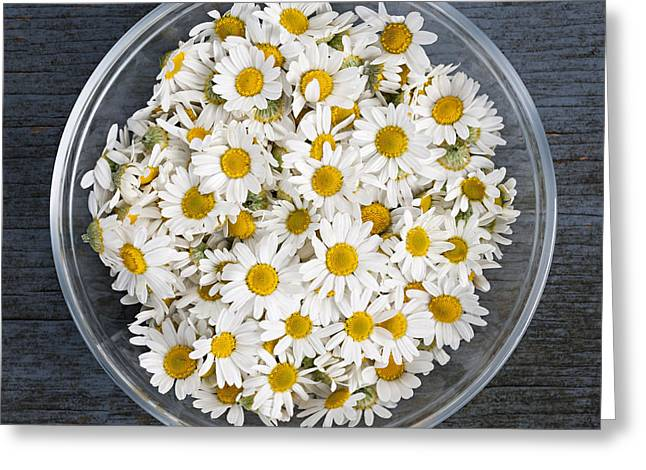 Wooden Bowl Greeting Cards - Chamomile flowers in bowl Greeting Card by Elena Elisseeva