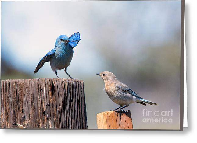 Bluebird Greeting Cards - Check the Moves Greeting Card by Mike Dawson