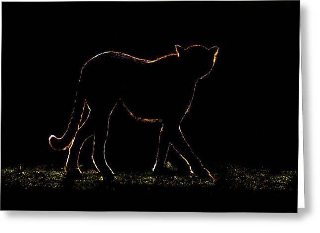 Cheetah Acinonyx Jubatus Walking Greeting Card by Panoramic Images