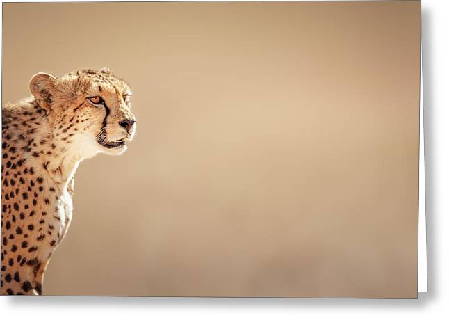 Felines Photographs Greeting Cards - Cheetah portrait Greeting Card by Johan Swanepoel