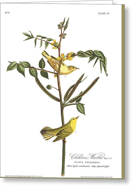 Warblers Greeting Cards - Childrens Warbler Greeting Card by John James Audubon