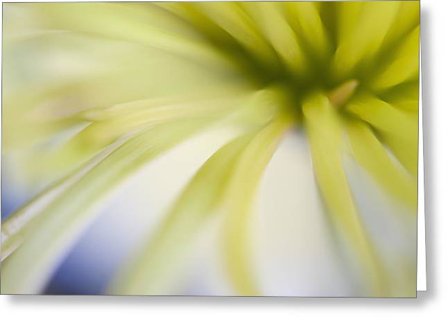 Pastell Greeting Cards - Chrysantheme Greeting Card by Silke Magino