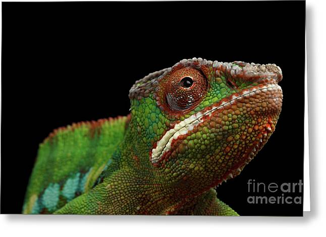 Closeup Head Of Panther Chameleon, Reptile In Profile View Isolated On Black Background Greeting Card by Sergey Taran