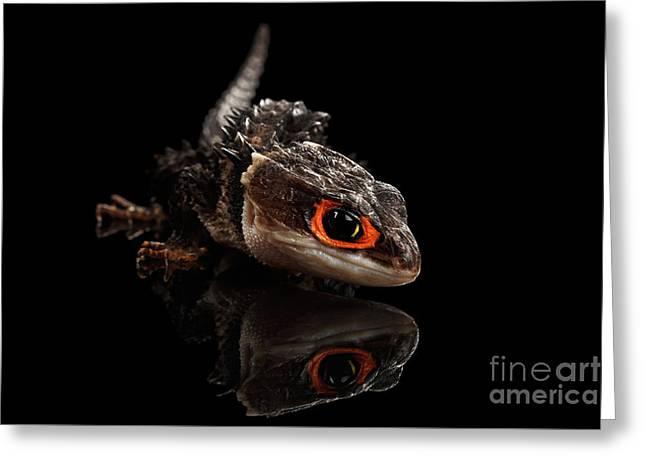 Closeup Red-eyed Crocodile Skink, Tribolonotus Gracilis, Isolated On Black Background Greeting Card by Sergey Taran