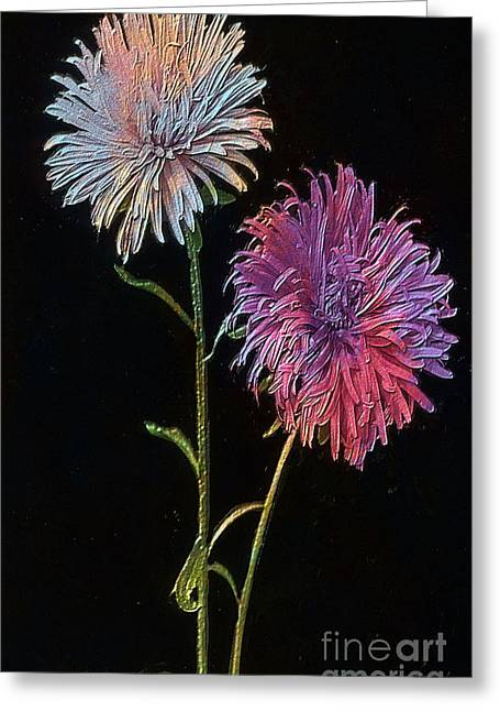 Renewing Greeting Cards - Colored Garden Asters Greeting Card by T Anderson