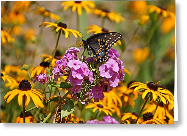 Indiana Flowers Greeting Cards - Colorful Greeting Card by Sandy Keeton