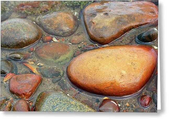 Colorful Shore Rocks 10 Greeting Card by Mary Bedy
