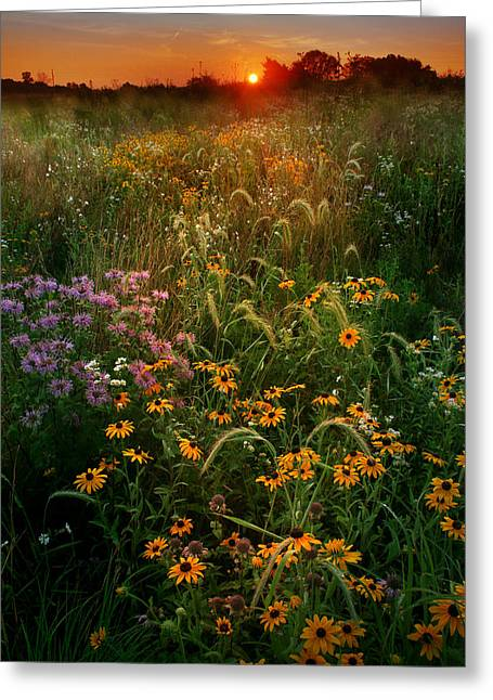Warm Summer Greeting Cards - Colors of Summer Greeting Card by Rob Blair