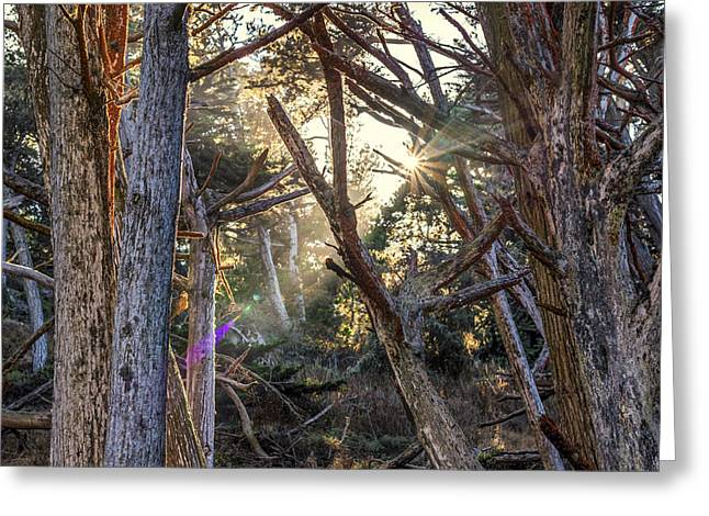 Point Lobos State Greeting Cards - Coming Through Greeting Card by Joseph S Giacalone
