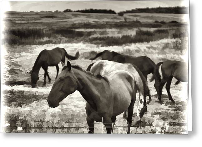 Horse Images Greeting Cards - Contentment Greeting Card by Gordon Wood