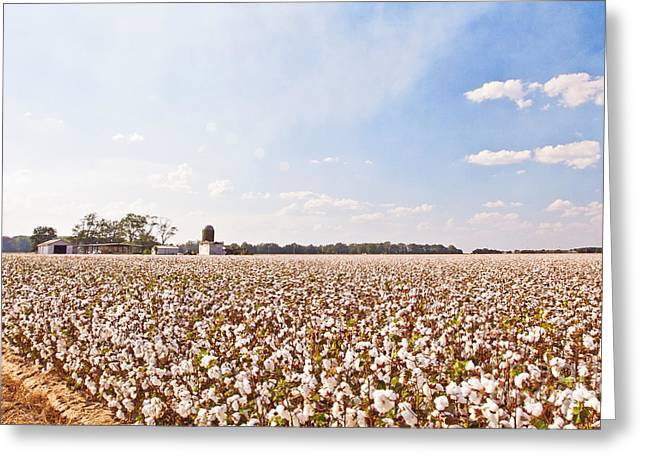 Arkansas Greeting Cards - Cotton Field Greeting Card by Scott Pellegrin