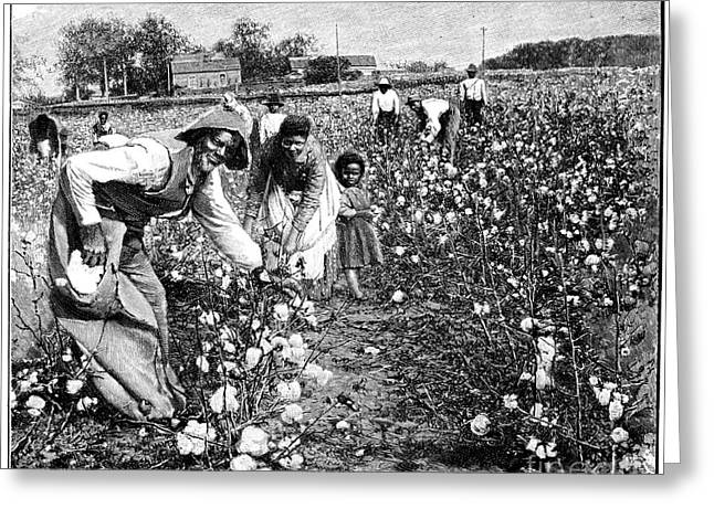 Cotton Pickers Greeting Cards - Cotton Industry, Early 20th Century Greeting Card by Spl