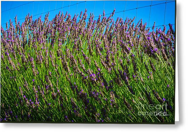 Countryside Mixed Media Greeting Cards - Country Lavender IV Greeting Card by Shari Warren