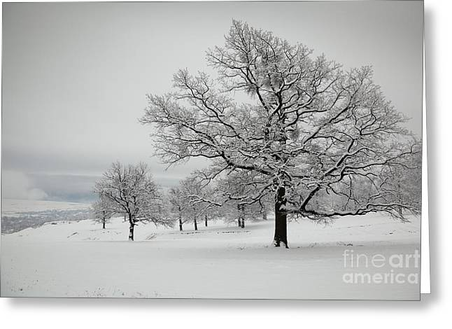 Snowy Day Greeting Cards - Countryside Greeting Card by Gabriela Insuratelu