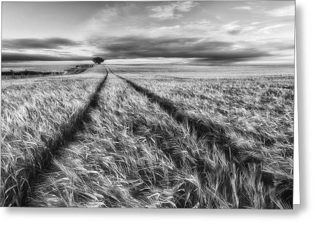 Monochrome Greeting Cards - Countryside Greeting Card by Piotr Krol (bax)