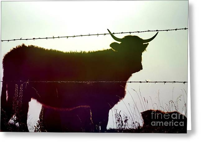Barbs Greeting Cards - Cow Greeting Card by Bernard Jaubert