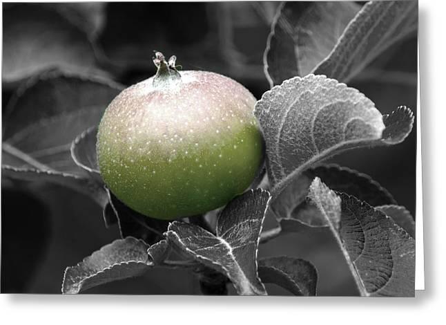 Fruit Tree Art Greeting Cards - Crab Apple Greeting Card by Douglas Miller
