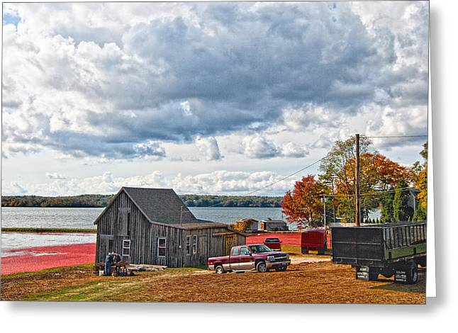 Cranberry Farming Greeting Card by Gina Cormier