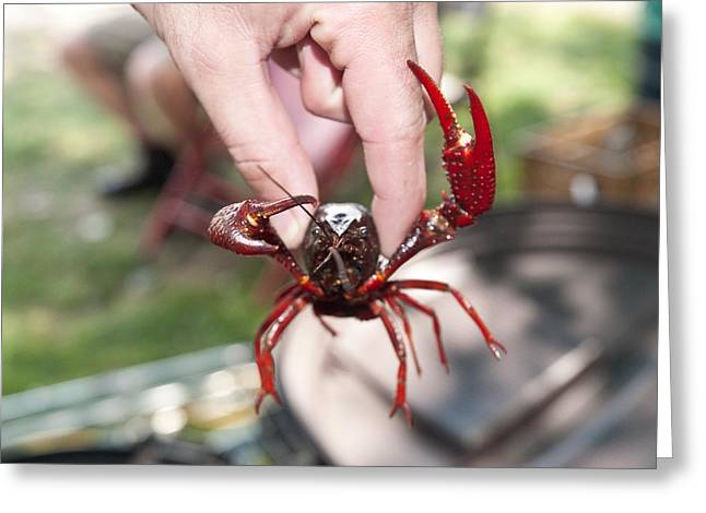 Crawfish Greeting Cards - Crawfish Greeting Card by Jim DeLillo