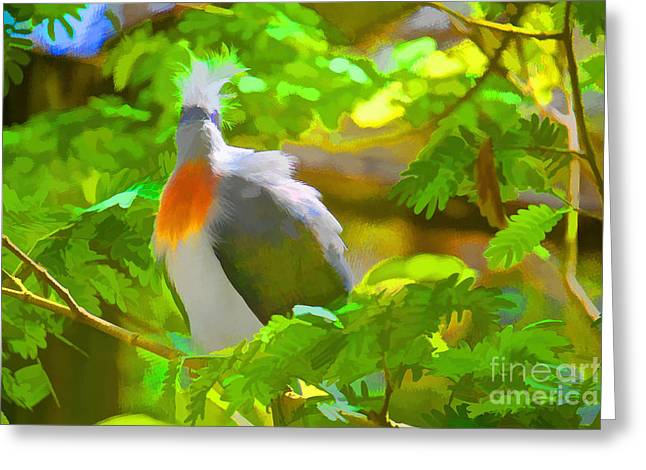 Starlet Paintings Greeting Cards - Crested Coua  Greeting Card by Judy Kay