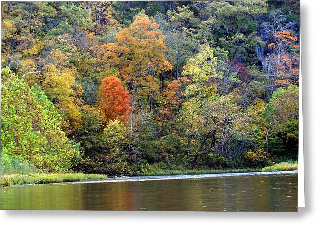 Current River Fall Greeting Card by Marty Koch