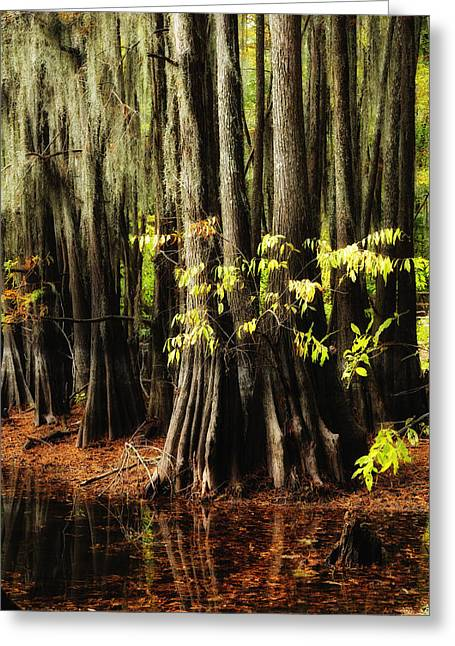 """caddo Lake"" Greeting Cards - Cypress Trunks Greeting Card by Iris Greenwell"