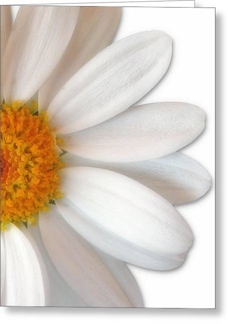 Daiseys Greeting Cards - Daisey Greeting Card by Jim  Hatch
