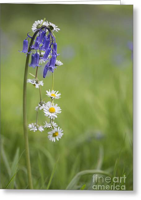 Daisy Greeting Cards - Daisy Chain Greeting Card by Tim Gainey