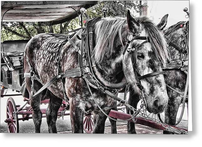 Buggy Whip Greeting Cards - Dapple Grey Greeting Card by JAMART Photography